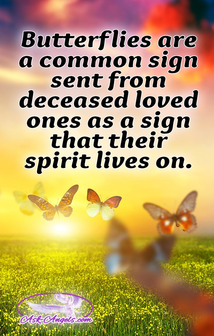 The meaning of the butterfly is so spiritually symbolic and butterflies also are often signs of Heaven sent from our loved ones as a sign that their soul and spirit lives on beyond the physical.