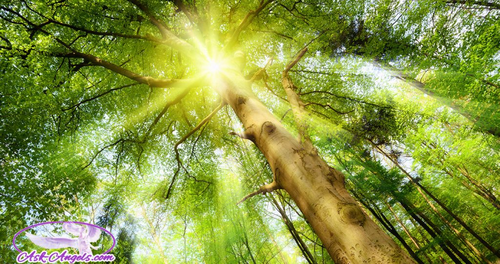 Anchoring Ascension Light Through Trees
