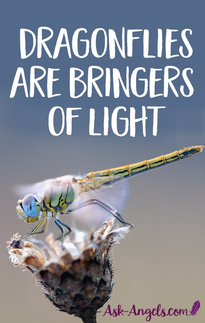 Dragonflies are Bringers of Light