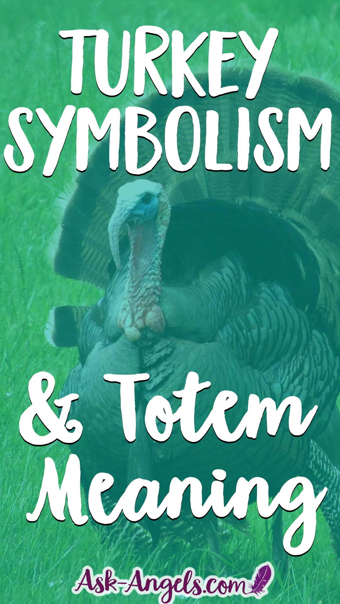 Turkey Symbolism and Totem Meaning