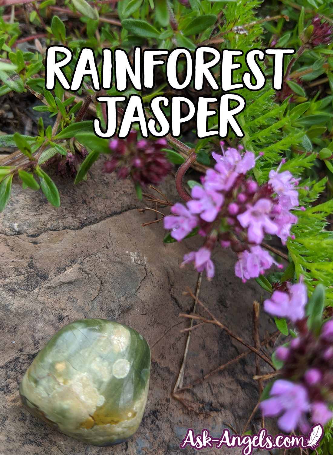 Rainforest Jasper in the Garden