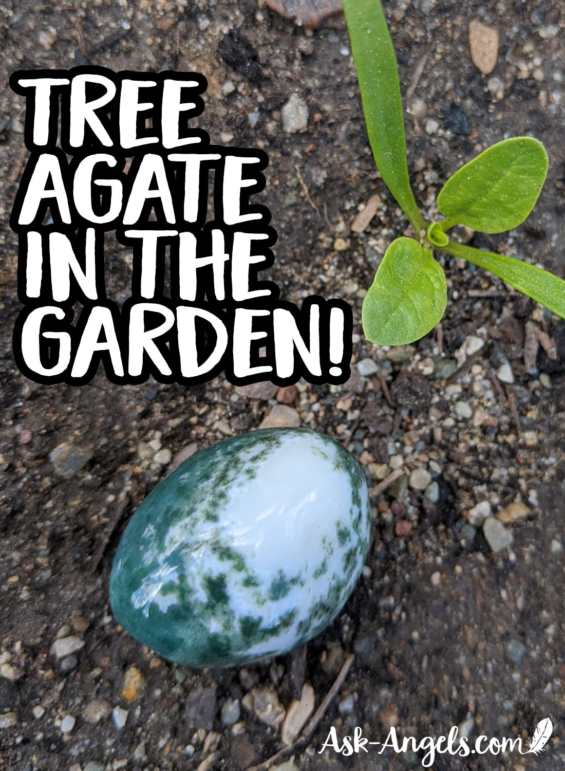 Tree Agate In The Garden